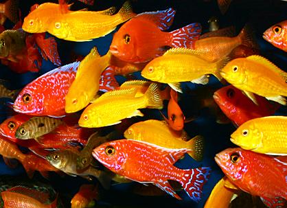ein fisch den man nicht essen kann